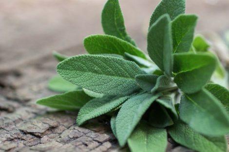 Salvia: beneficios, propiedades y contraindicaciones