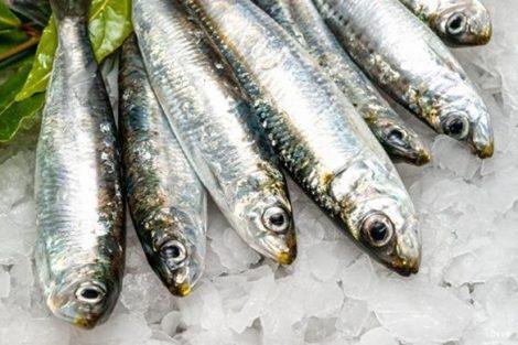 Las sardinas: descubre las propiedades nutritivas de este pequeño gran tesoro