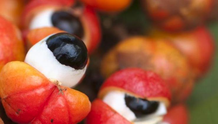 Beneficios del guaraná