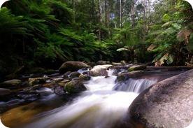 Sonidos de la naturaleza para relajarte