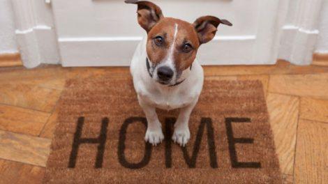 tener-perros-en-casa