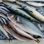 Pescados azules principales: tipos y beneficios de cada uno