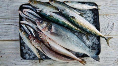 Tipos de pescados azules