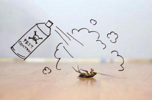 Remedios caseros para las picaduras de pulgas - Acabar con las pulgas en casa ...
