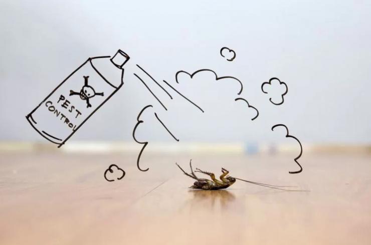 Trampas Naturales Para Acabar Con Las Cucarachas En Casa