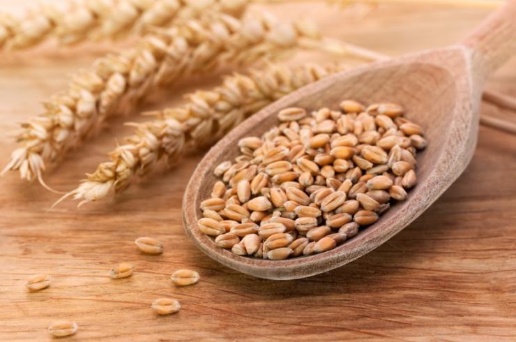 Consumo de trigo y enfermedades crónicas