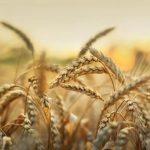 trigo-enfermedades-autoinmunes