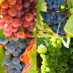 uvas-beneficios-propiedades