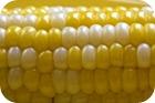 Valores nutricionales del maíz