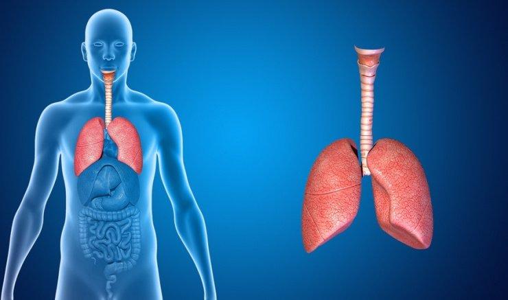 via-respiratoria